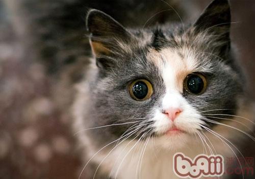 猫咪吃鱼有讲究-成猫饲养